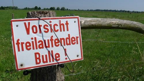 Vorsicht freilaufender Bulle