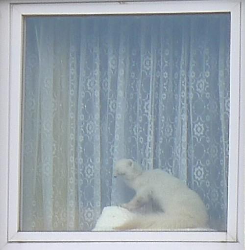 Ausstellungsstück im Fenster