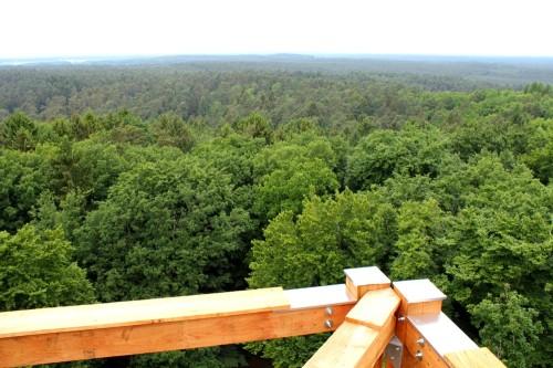 Der Drawehn: bewaldetes Grün in alle Himmelsrichtungen